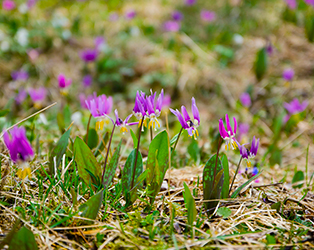 Весенний тур Цветение маральника и гора Сарлык